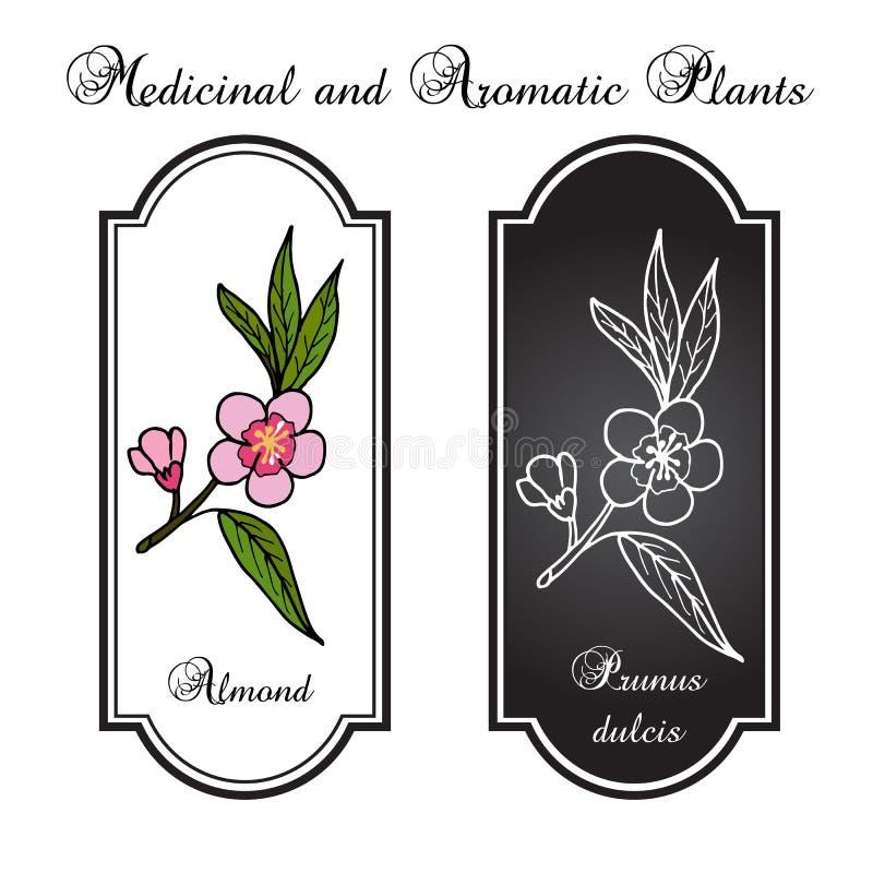 Flores de la almendra en una rama ilustración del vector
