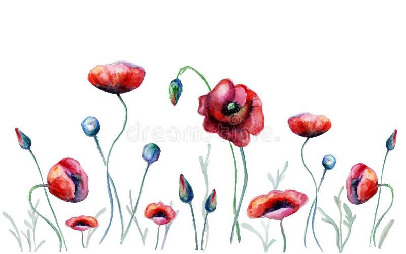 Flores de la amapola de la acuarela ilustración del vector
