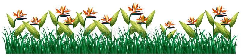 Flores de la ave del paraíso en arbusto ilustración del vector