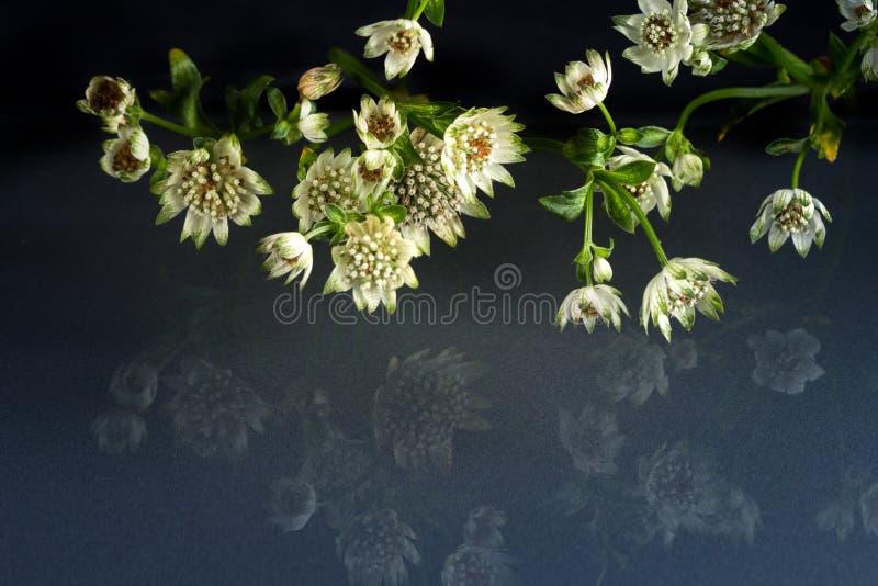 Flores de la belleza fantástica de la fauna foto de archivo