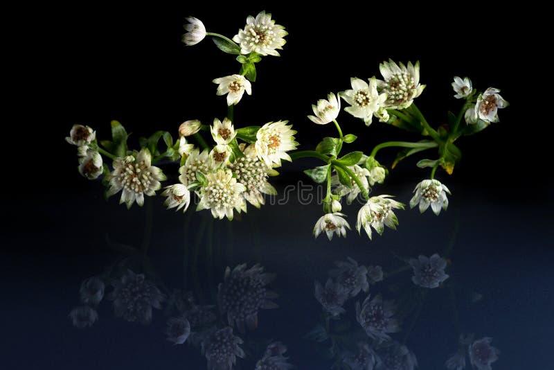 Flores de la belleza fantástica de la fauna fotografía de archivo