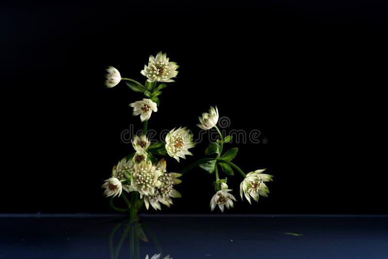 Flores de la belleza fantástica de la fauna foto de archivo libre de regalías