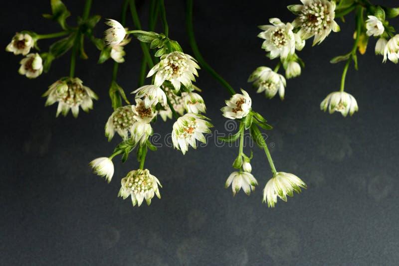 Flores de la belleza fantástica de la fauna fotos de archivo