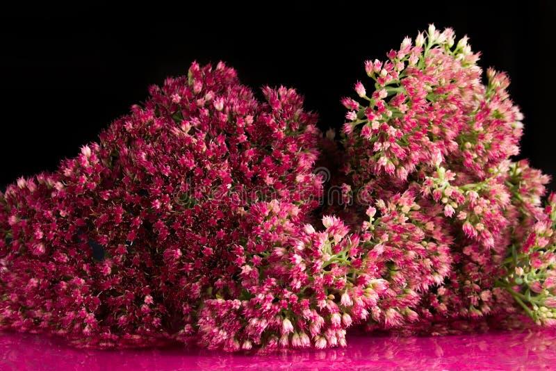 Flores de la belleza fantástica de la fauna imagen de archivo