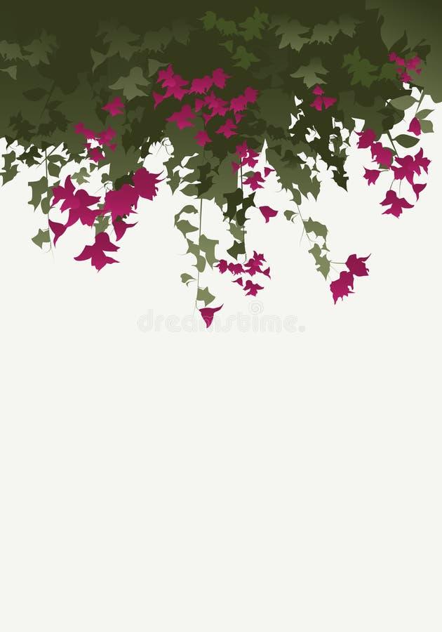 Flores de la buganvilla ilustración del vector