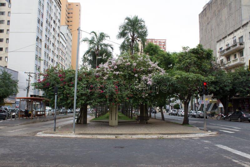 Flores de la buganvilla en la avenida de Goias, Goiania/el Brasil fotografía de archivo libre de regalías
