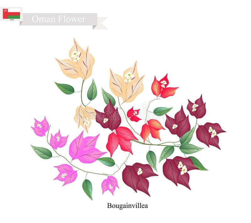 Flores de la buganvilla, la flor nativa de Omán ilustración del vector