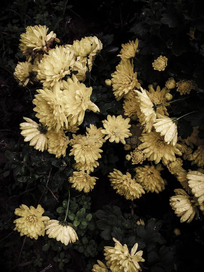 Flores de la caída fotografía de archivo libre de regalías