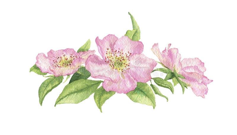 Flores de la cadera de Rose imagenes de archivo