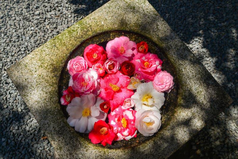 Flores de la camelia que flotan en el pote de piedra imágenes de archivo libres de regalías