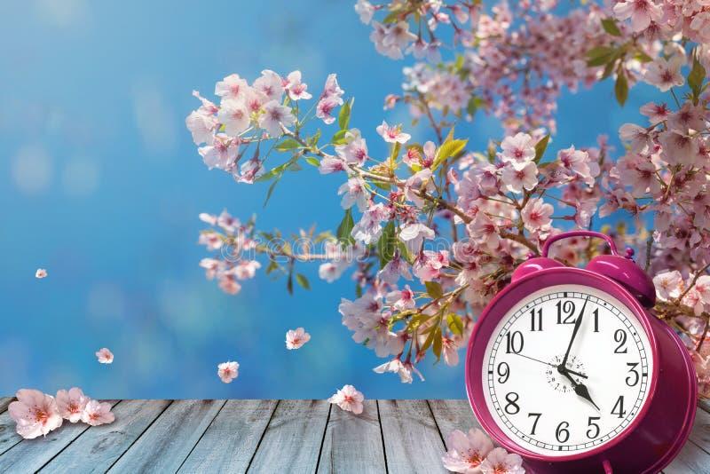 Flores de la cereza del reloj y de la primavera - concepto del horario de verano fotos de archivo
