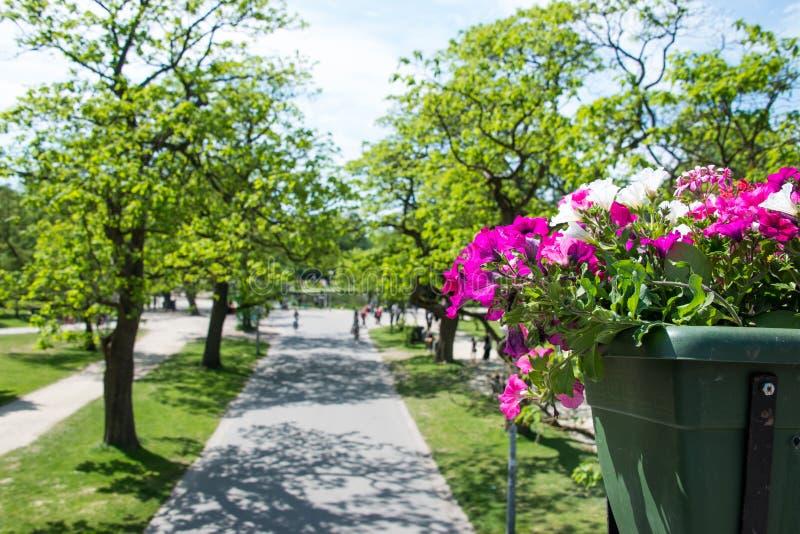 Flores de la correhuela delante de un parque imágenes de archivo libres de regalías