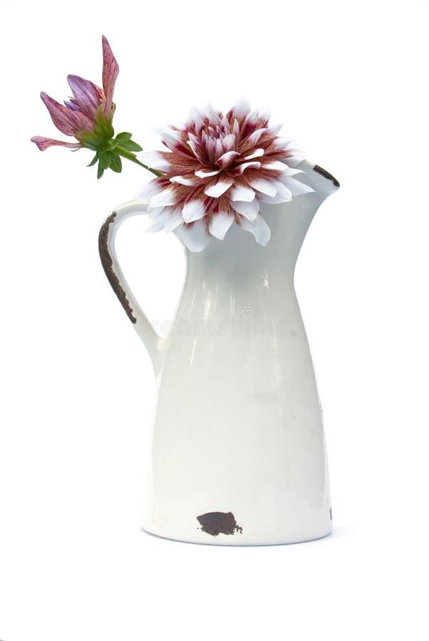 Flores de la dalia fotografía de archivo