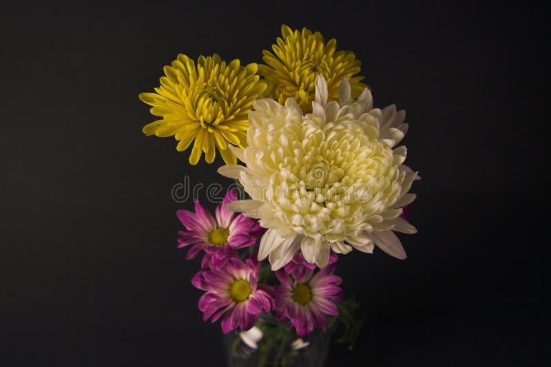 Flores de la dalia y de la margarita imagenes de archivo