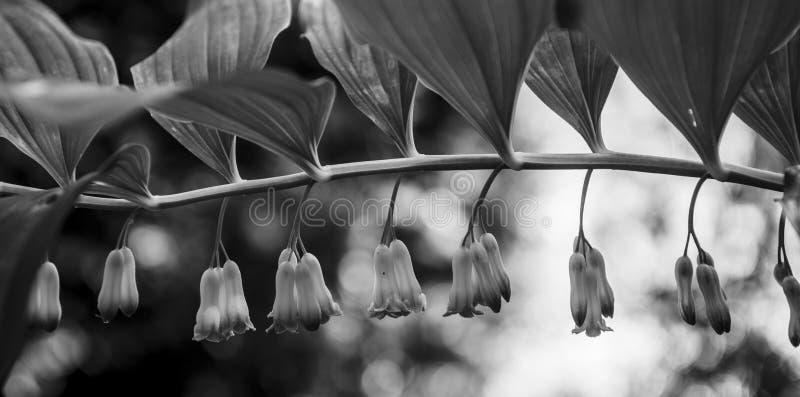 Flores de la estación de primavera fotos de archivo