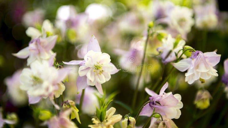 Flores de la estación de primavera imagen de archivo libre de regalías