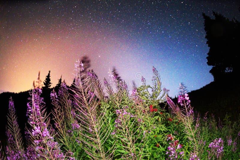 Flores de la estrella foto de archivo libre de regalías