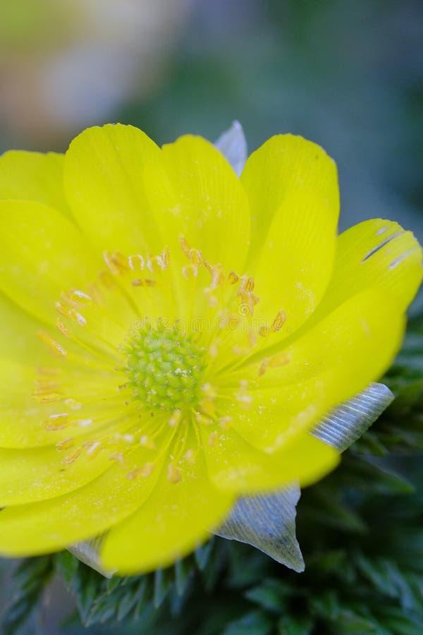 Flores de la flor que florecen en la primavera fotografía de archivo