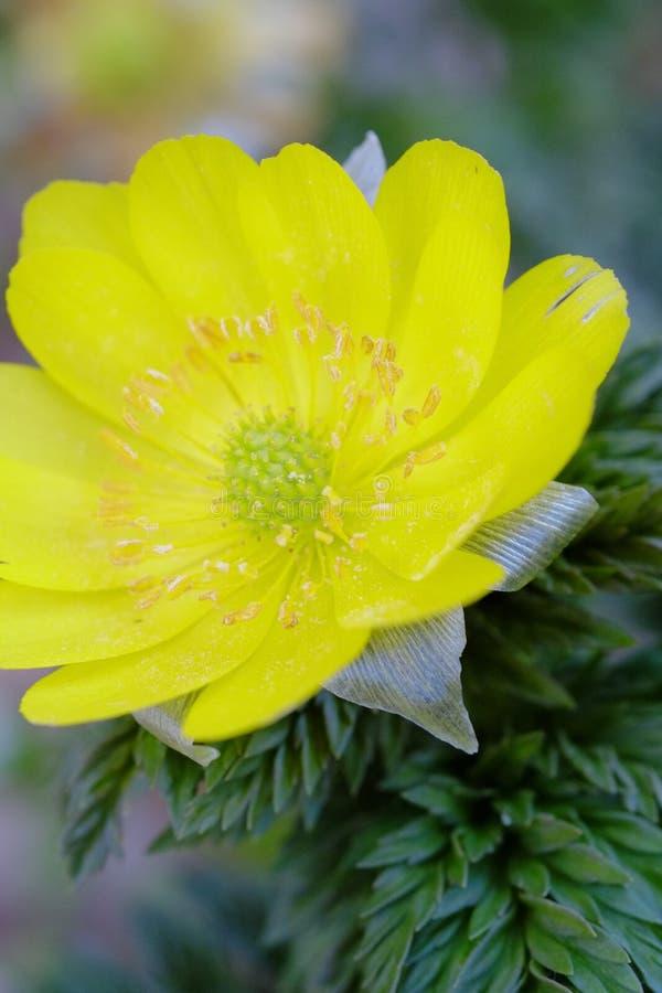 Flores de la flor que florecen en la primavera fotos de archivo