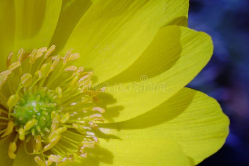 Flores de la flor que florecen en la primavera fotos de archivo libres de regalías