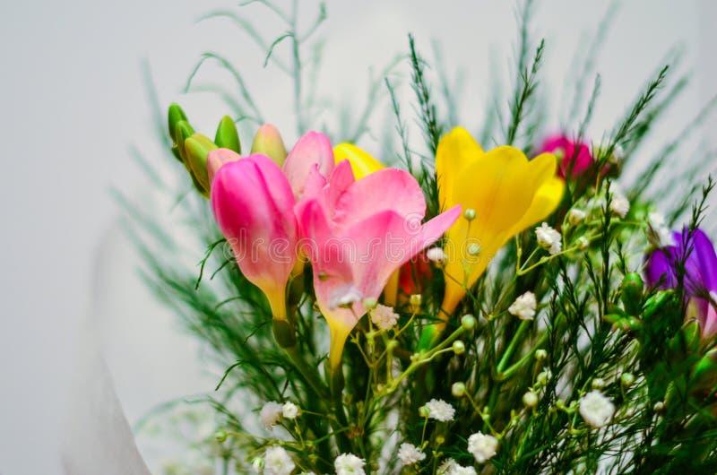 Flores de la fresia imágenes de archivo libres de regalías