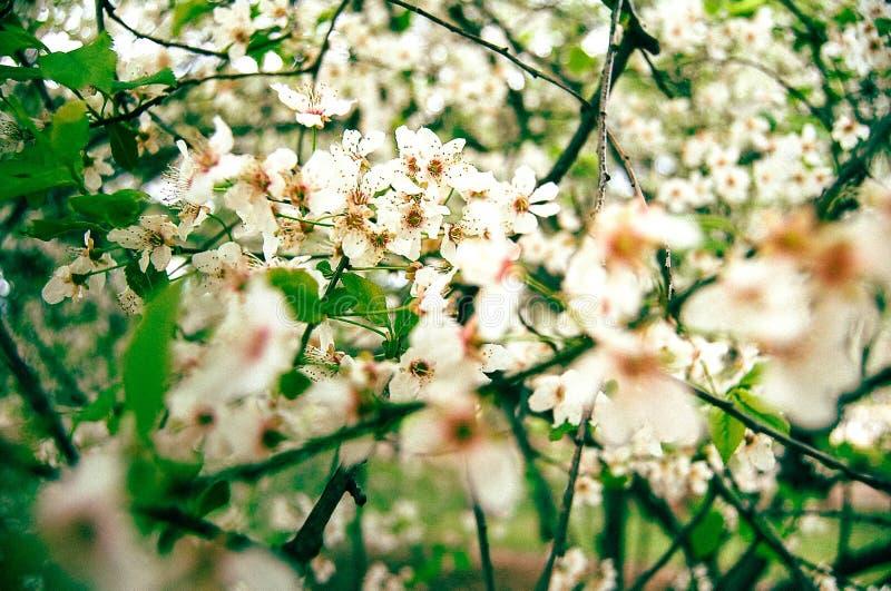 Flores de la frialdad fotografía de archivo libre de regalías