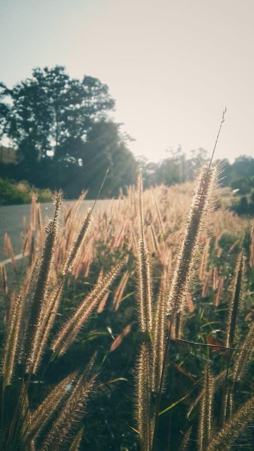 Flores de la hierba fotografía de archivo