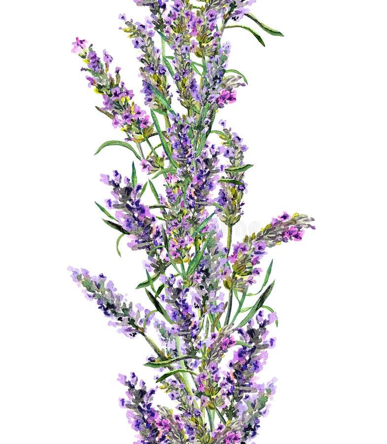 Flores de la lavanda que repiten el marco Frontera de la acuarela del vintage ilustración del vector