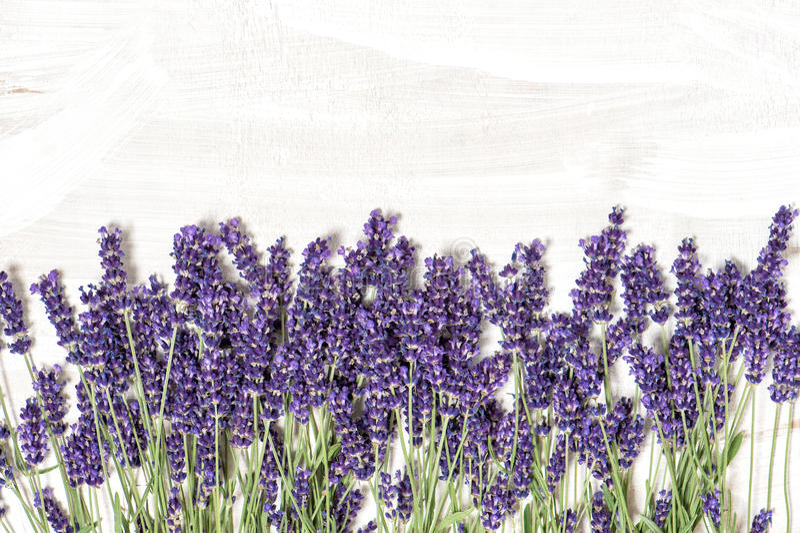 Flores de la lavanda sobre el fondo de madera blanco de la textura imagenes de archivo