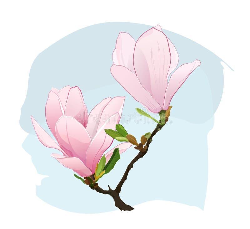 Flores de la magnolia ilustración del vector