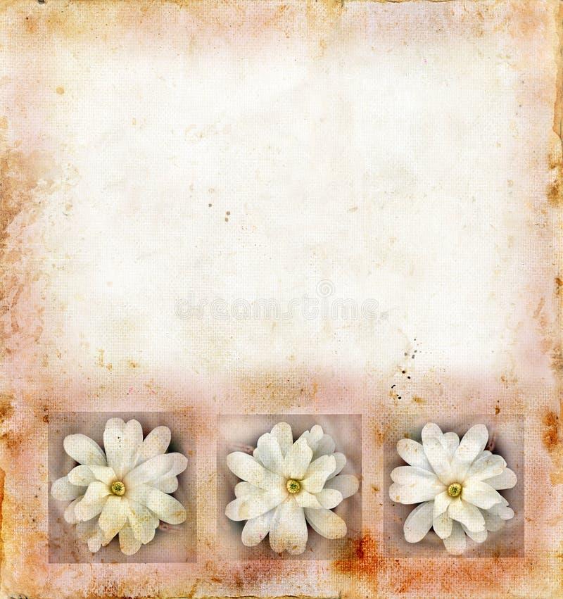 Flores de la magnolia en el fondo de Grunge ilustración del vector