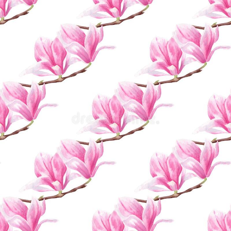 Flores de la magnolia en modelo inconsútil de la acuarela exhausta de la mano de la rama libre illustration