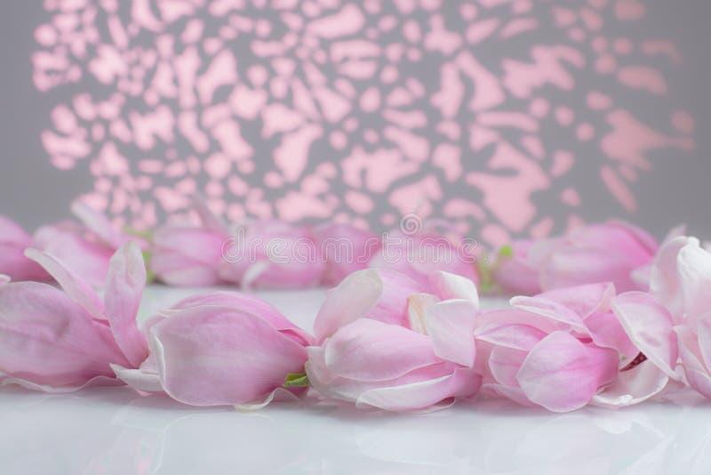 Flores de la magnolia en un tablero blanco fotos de archivo libres de regalías