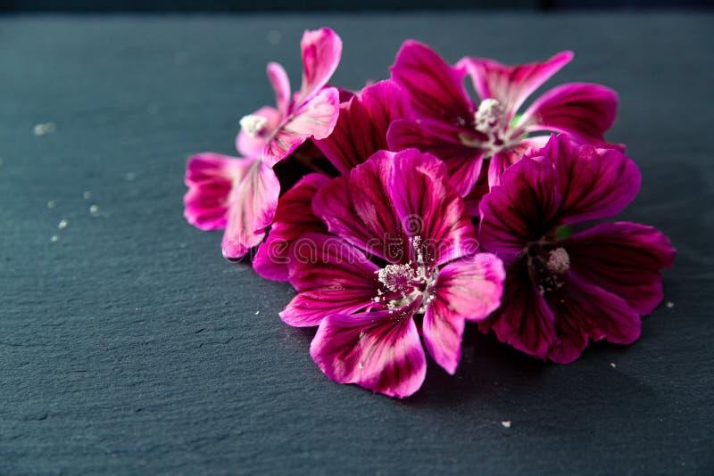 Flores de la malva com?n fotos de archivo libres de regalías