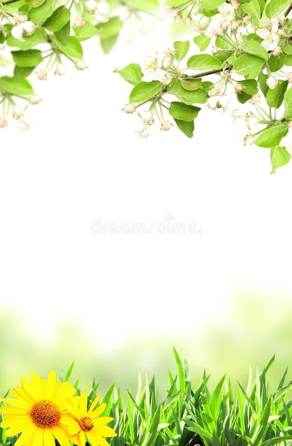 Flores de la manzana y de la hierba verde fotografía de archivo