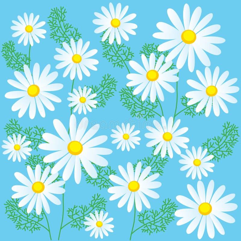 Flores de la manzanilla en un fondo azul Ejemplos inconsútiles del vector Flores de la manzanilla para la venta stock de ilustración