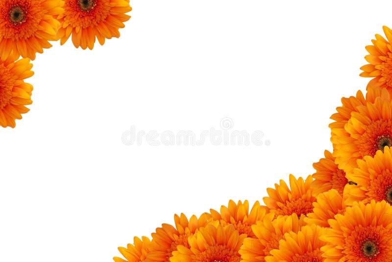 Flores de la margarita anaranjada imagenes de archivo