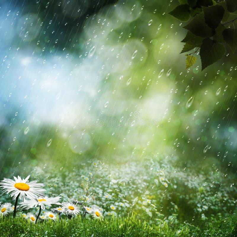 Flores de la margarita bajo la lluvia dulce ilustración del vector