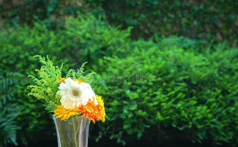 Flores de la margarita del Gerbera en un florero foto de archivo libre de regalías