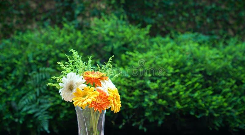 Flores de la margarita del Gerbera en un florero fotos de archivo libres de regalías