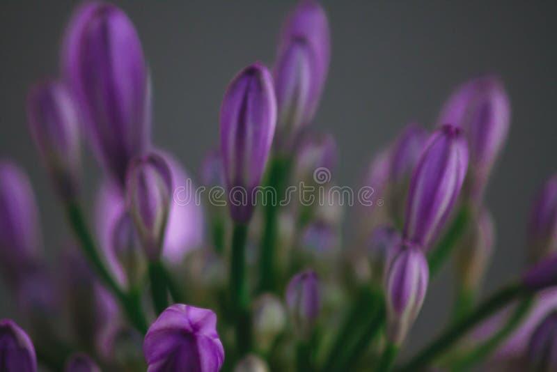 flores de la naturaleza fotografía de archivo libre de regalías
