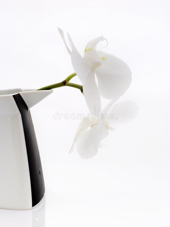 Flores de la orquídea en el crisol fotografía de archivo libre de regalías