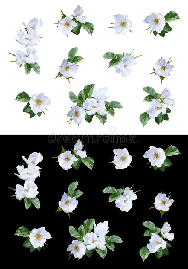 Flores de la pintura de la acuarela libre illustration