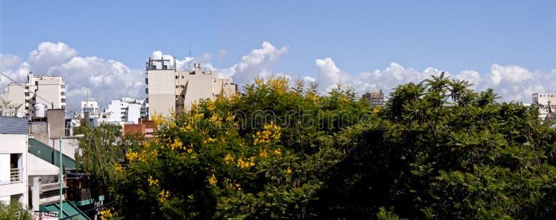 Flores de la pita de Ibira en una vista panorámica aérea del cielo de la ciudad de Buenos Aires imagen de archivo