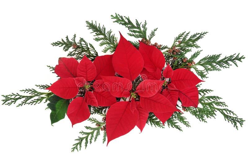 Flores de la poinsetia imagen de archivo libre de regalías