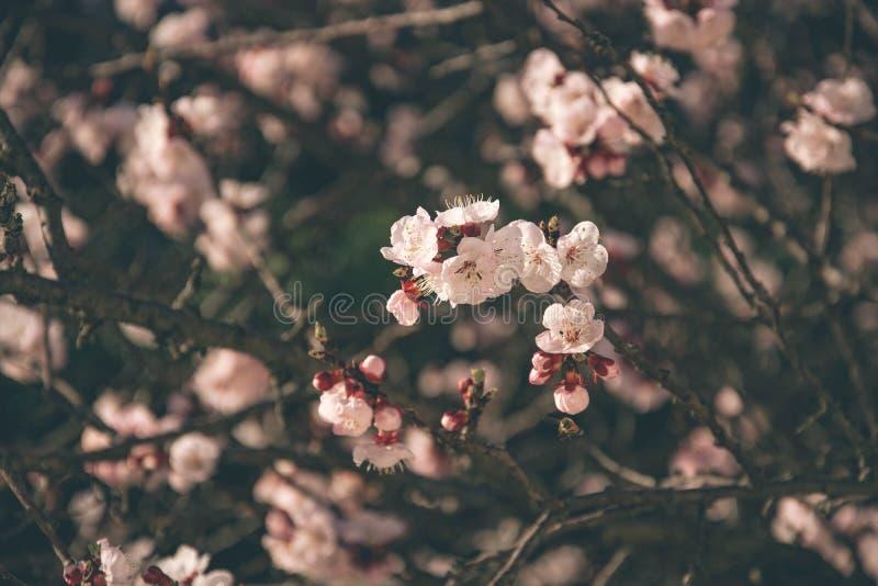 Flores 4 de la primavera imágenes de archivo libres de regalías