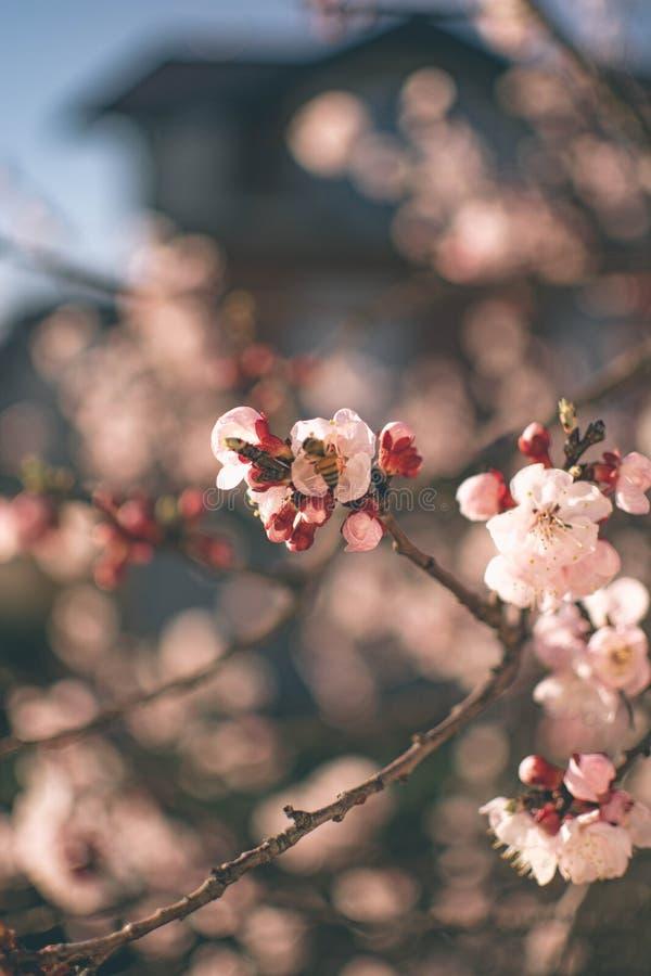 Flores 6 de la primavera fotografía de archivo libre de regalías