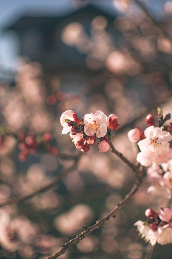 Flores 7 de la primavera imágenes de archivo libres de regalías