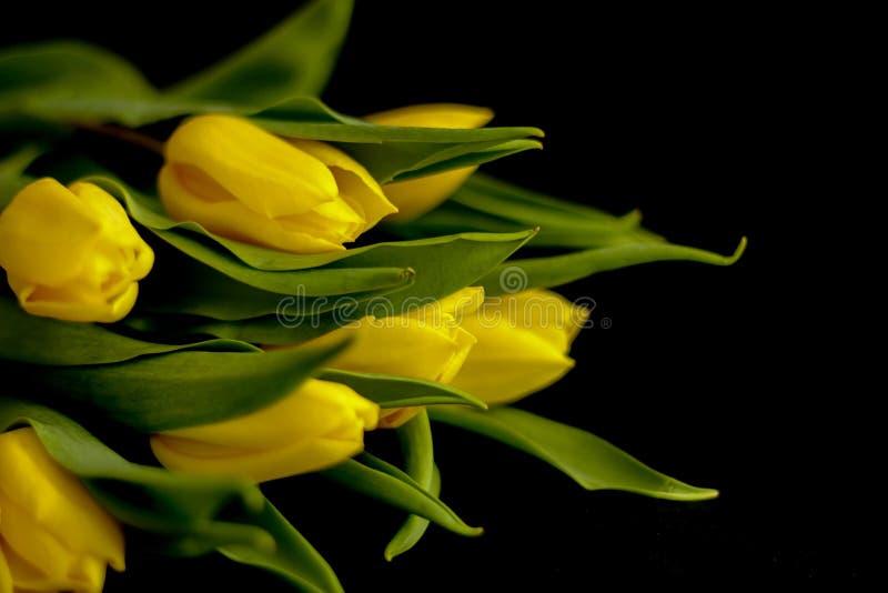 Flores de la primavera - concepto perfecto para los medios sociales foto de archivo