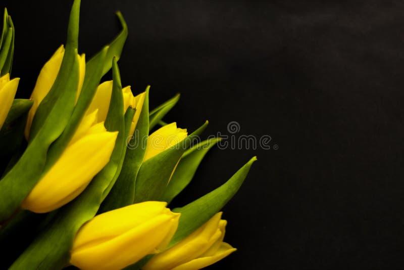 Flores de la primavera - concepto perfecto para los medios sociales fotografía de archivo